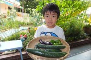 食育*夏野菜収穫始まり