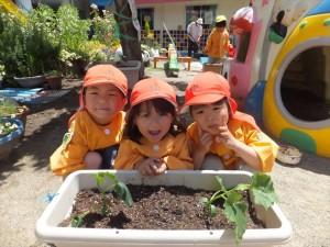 食育*苗植え