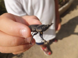 自然*幼稚園に小クワガタが飛んで来た